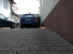 Walldorf cat, June 2018