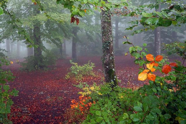 Fog .. colours .. silence ©twe2020☼