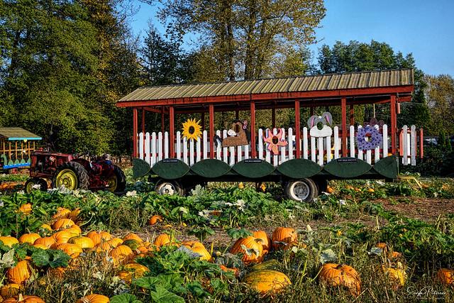 Tractor Hayride - Port Kells Nurseries Pumpkin Patch