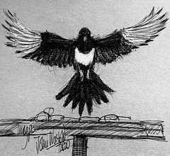 Magpie in the garden. Ballpoint pen drawing by jmsw, on recycled card, highlights in Gouache.