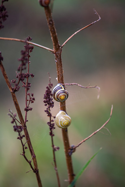 Fall colors with snails