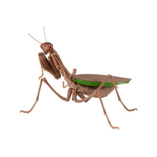 GASHAPON 昆蟲圖鑑超擬真「大螳螂」環保扭蛋 19公分大尺寸再現生動細節!
