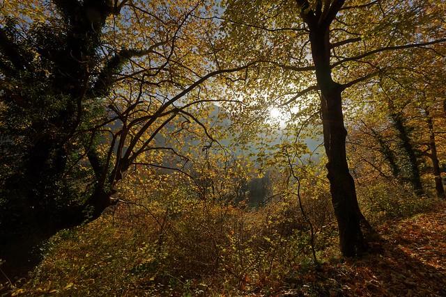 sunrise during autumn