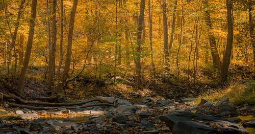 fall autumn leaves foliage trees outside outdoors roadtrip nature woods forests mountains colors orange yellow red brown green october sunlight sunny weather branches zoom lens sony alpha a7riii ilce7rm3 sel100400gm gm gmaster telephoto landscape creek owenscreek thurmont maryland md catoctin nps
