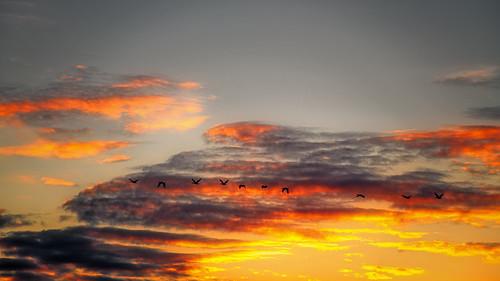 goose light sundown sunset landscape clouds sky wildlife nature nikon goldenhour ngc