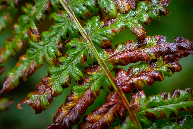 Fall Frond