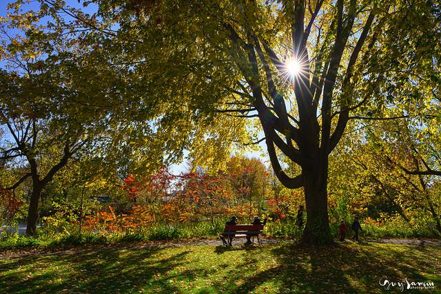 Journée d'automne à l'étang
