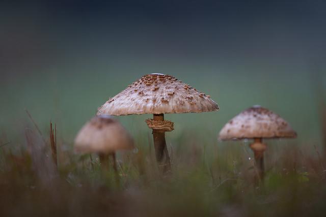 Magic Mushroom - in the magic forest.
