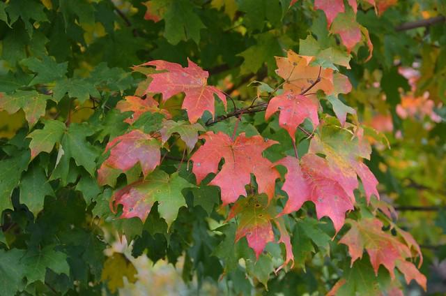 Fall at National Park Seminary