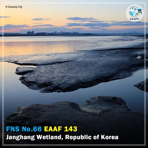 EAAF143 (Janghang Wetlands) Card News
