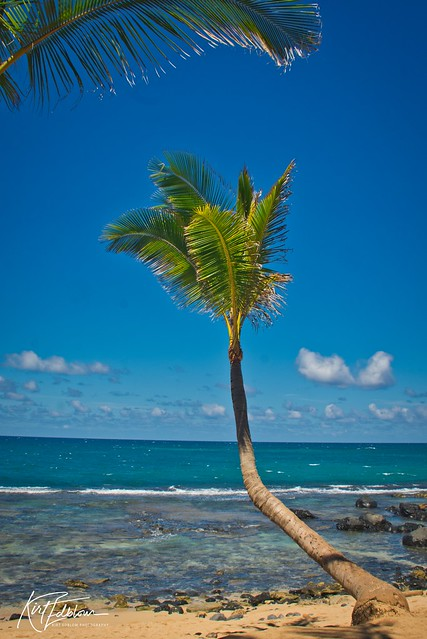 My favorite kind of palm