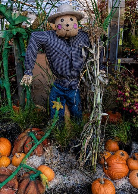 'Tis the Season - Art's Nursery Garden & Home