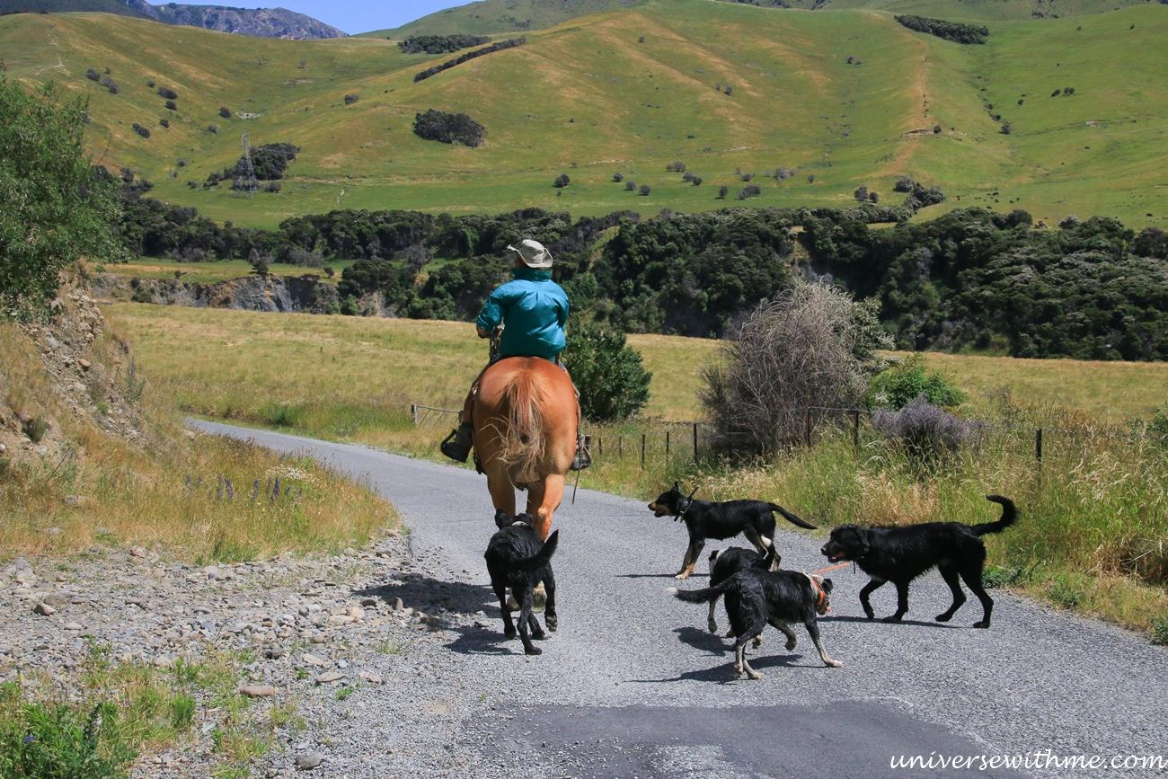 New Zealand Trip Again_045