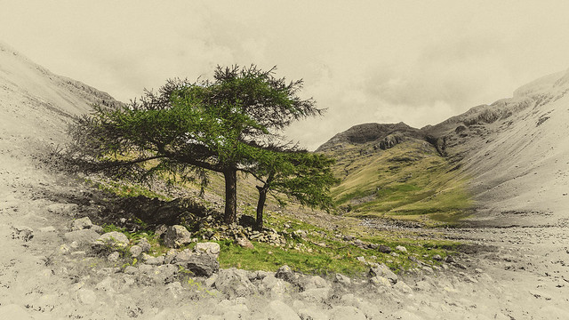 Tree in Wasdale