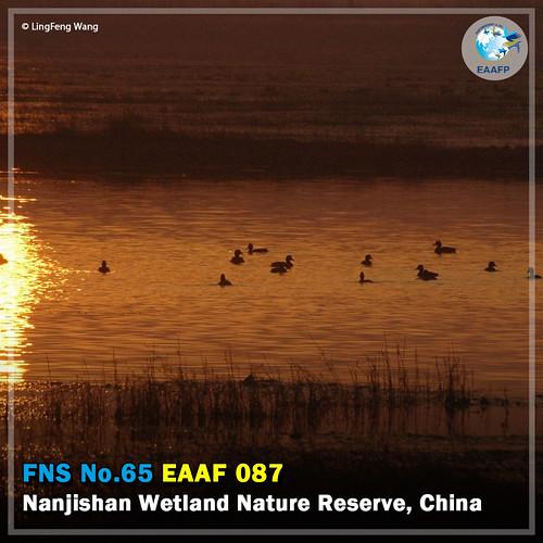 EAAF087 (Nanjishan Wetland Nature Reserve) Card News