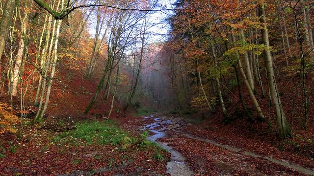 Kleiner Bach im Herbst - Small creek in autumn