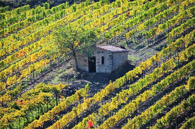 Montalcino e le sue vigne