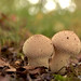 Macro Mushrooms_00084