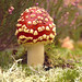 Macro Mushrooms_00077