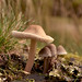 Macro Mushrooms_00079