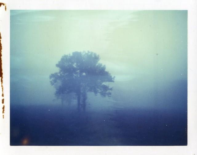 Polaroid Week Day Two - Tree Fog