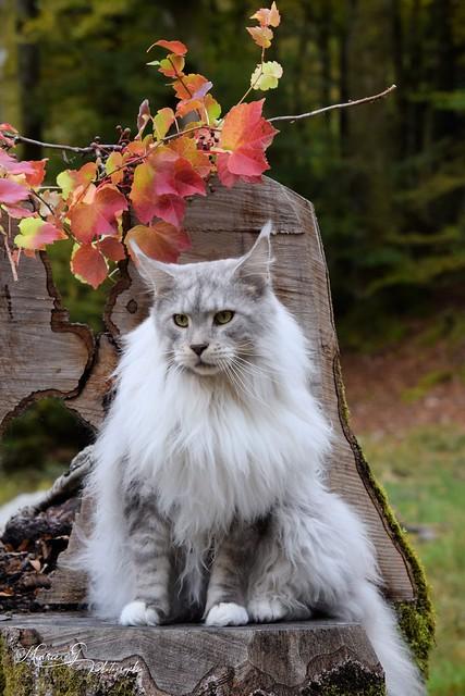 Osheen aux couleurs de l'automne.