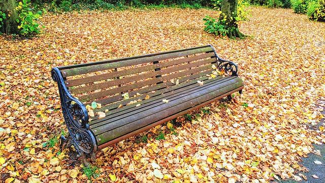 Haslam Park bench
