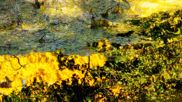 Warm Reflections In A Pond