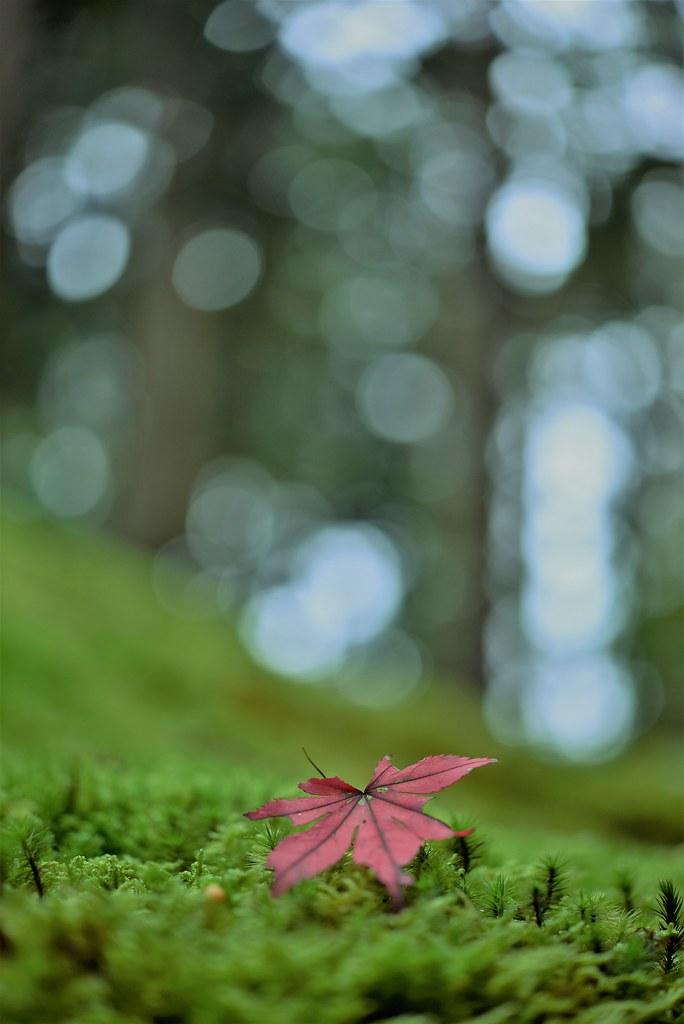 ✪「苔の里」でみつけた秋の一葉 -石川県小松市-