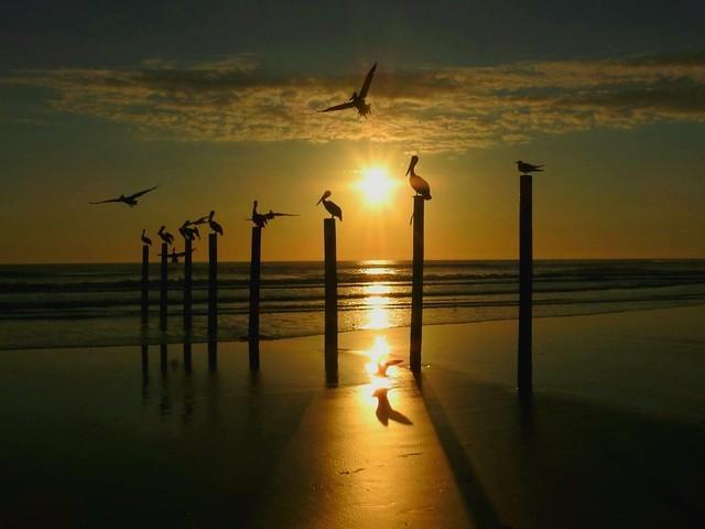 Sunrise,  Daytona Beach Shores
