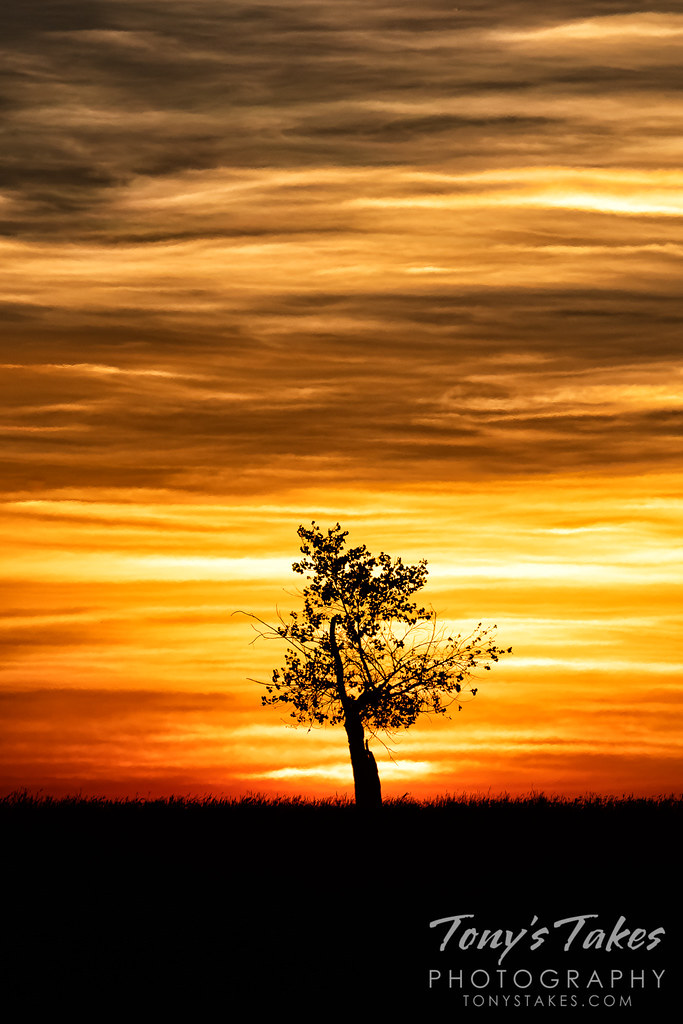Lone tree against the sunrise