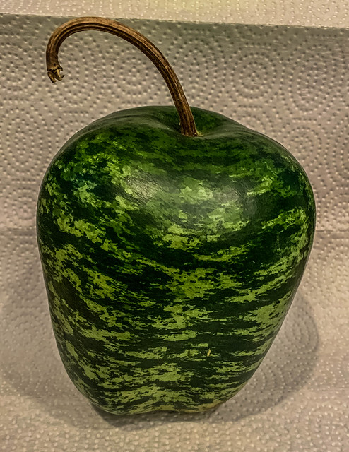 2020 - photo 281 of 366 - apple gourd