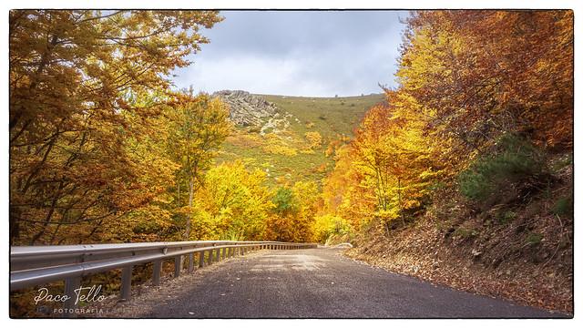 Camino al otoño. Sierra de Madrid