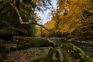 Reaching Into Autumn