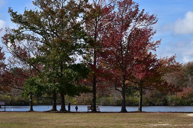 DSC_8785 Fall Colors @ Belmont Lake Park
