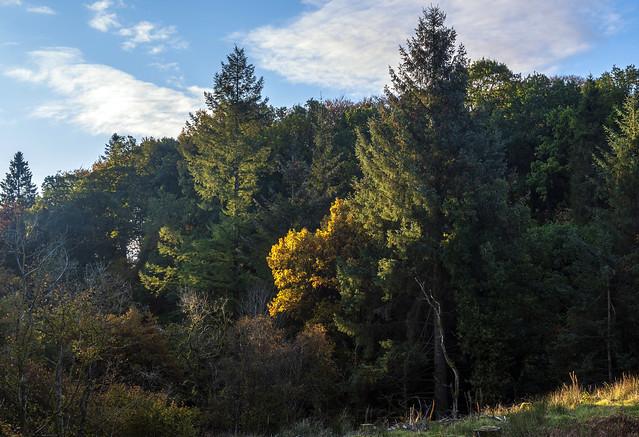 Trees , Sunrise Light, Lochwinnoch, Renfrewshire, Scotland, UK