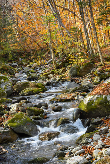 Autumn Woodland Stream