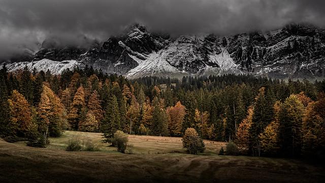 Autumn Forest, Schwägalp - Switzerland