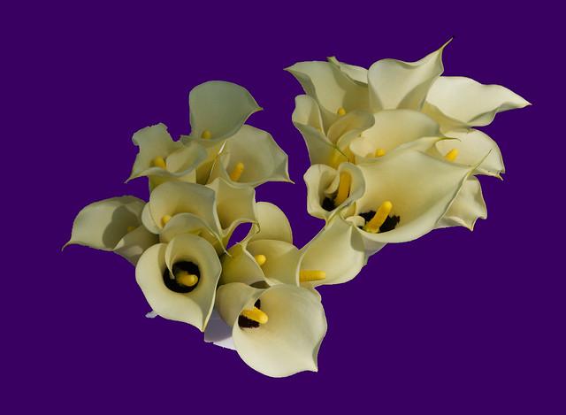 Lilies on Purple