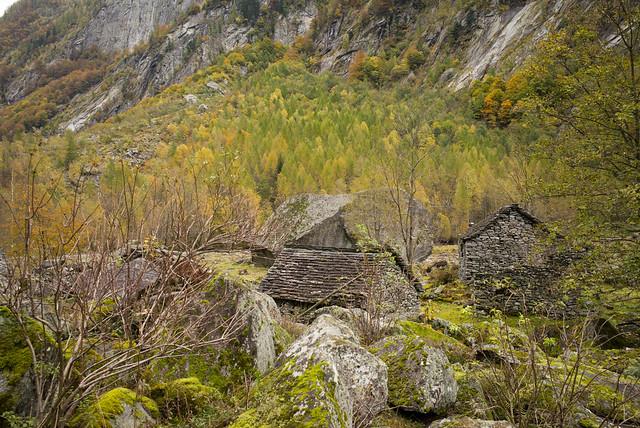 bosco autunnale @Gerra . Val Calnègia (Ticino)