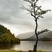 "<p><a href=""https://www.flickr.com/people/philip_lench/"">Philip Lench</a> posted a photo:</p>  <p><a href=""https://www.flickr.com/photos/philip_lench/50506919341/"" title=""Lake District - Derwent Water 6""><img src=""https://live.staticflickr.com/65535/50506919341_461b007153_m.jpg"" width=""160"" height=""240"" alt=""Lake District - Derwent Water 6"" /></a></p>  <p>Yet another Lone Tree</p>"