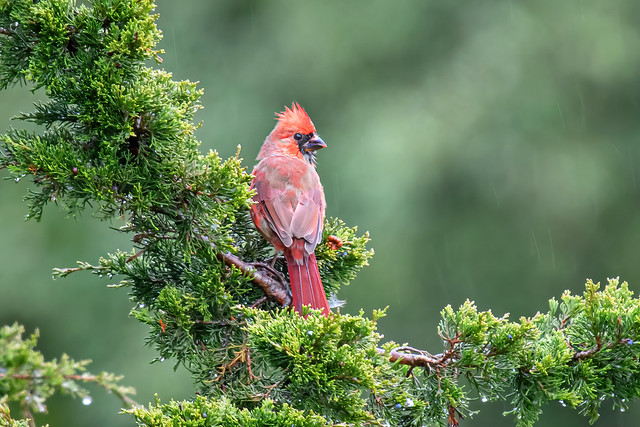 A different view of the young Cardinal