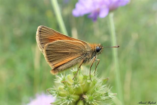 Butterfly 2089