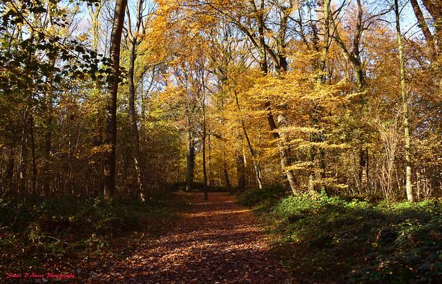 autumn 401