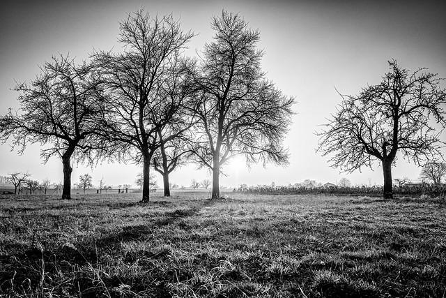 The Trees' Dance Floor...