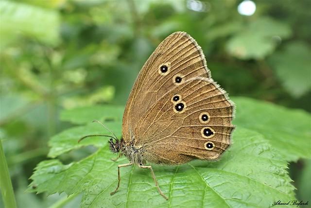 Butterfly 2090