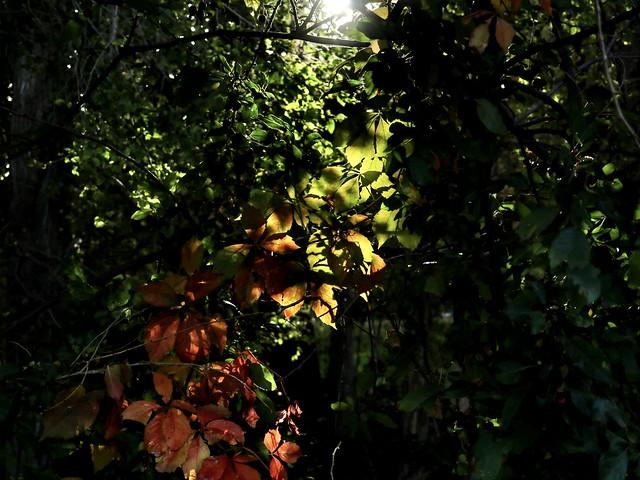 Light Flow on Morning Stroll