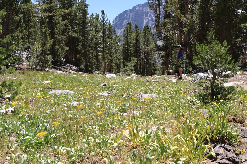 August flowers in a small meadow as we head back down the trail from Sixth Lake