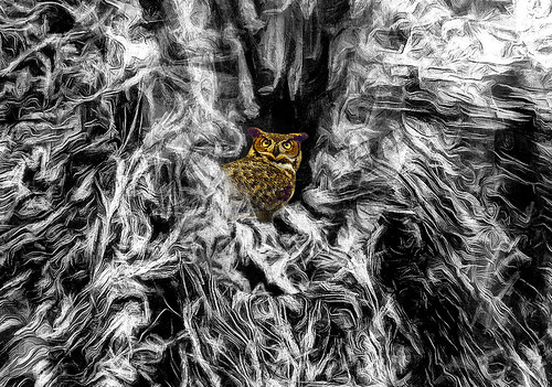 owl wood tree close up bw color style telephoto lens colorful day digital flickr country bright happy colour scenic america world sunset sky red nature blue white green art light sun cloud park landscape summer old new photoshop google bing yahoo stumbleupon getty national geographic creative composite manipulation hue pinterest blog twitter comons wiki pixel artistic topaz filter on1 sunshine image reddit tinder russ seidel facebook timber unique unusual fascinating