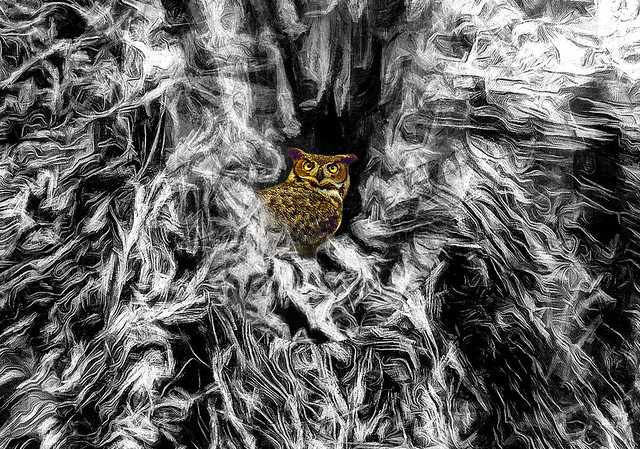 Owl in the Wood